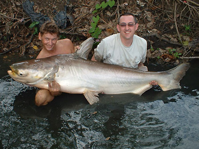 Giant Mekong Catfish from Bangkok.