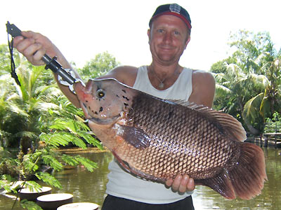 Giant Gourami from Par Lai Lake in Phuket.