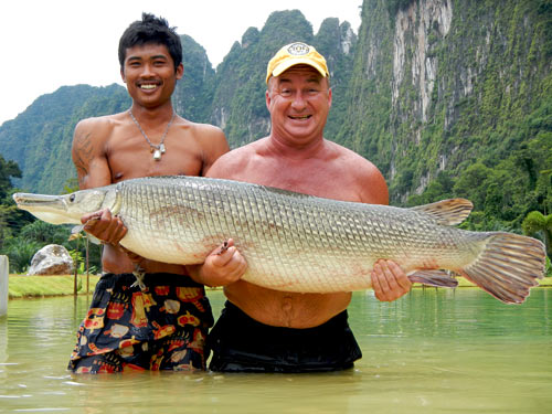 Alligator Gar from Exotic Fishing Thailand.