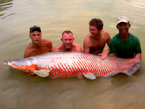 Arapaima from Exotic Fishing Thailand.