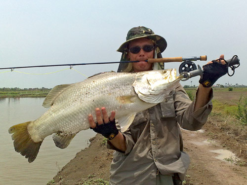 Barramundi on fly.