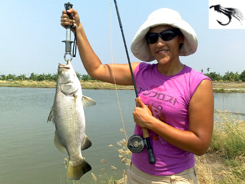 Lady Barramundi fly angler.