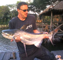 Giant Catfish from Bungsam Lan.