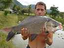 Giant Siamese Carp from Koh Samui.
