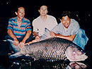 Giant Siamese Carp from Bungsam Lan.