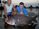 Enormous Giant Siamese Carp from Bangkok!