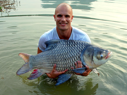 Giant Siamese Carp from Krabi.