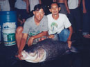 Giant Siamese Carp from Bangkok.
