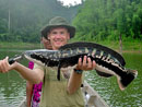 Giant Snakehead from Cheow Lan.