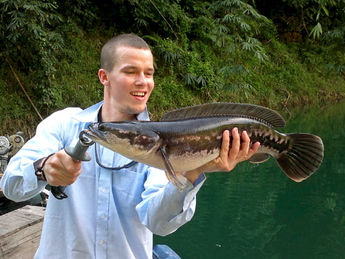 Giant Snakehead from Cheow Lan Lake.