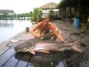 Huge Giant Mekong Catfish.