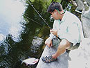 Landing a Red Bellied Pacu on fly in Phuket.