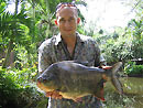Red Bellied Pacu from Par Lai Lake.