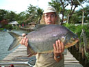 Red Bellied Pacu from Bangkok.