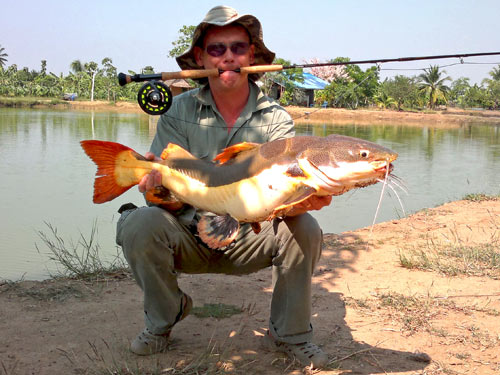 Amazon Redtail Catfish on fly.