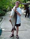 Huge Striped Catfish.
