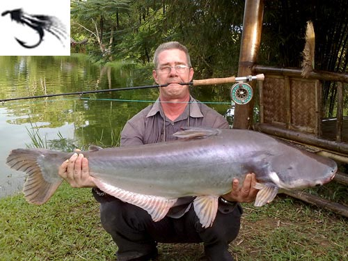 Striped Catfish on fly from Sawai Lake Phuket.