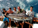 Black Marlin from Similans.