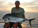Giant Trevally from Similans.