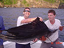 Sailfish caught on a belly strip.
