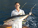 Andaman Island Yellowfin Tuna.