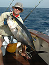 Similan Island Yellowfin Tuna.