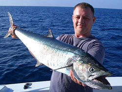 Narrow-barred Spanish Mackerel during a day charter